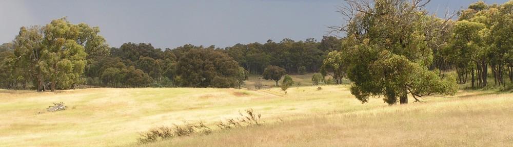 Restoring grassy woodland